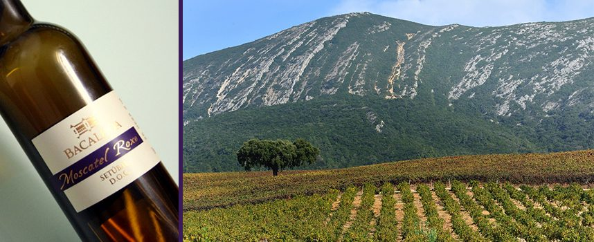 Decanter World Wine Awards 2014 medalha 36 Vinhos da Península de Setúbal